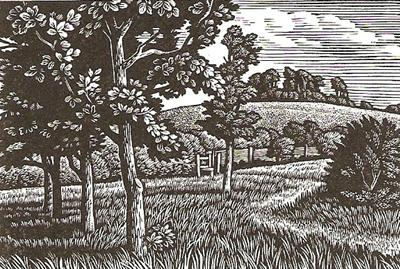 Wittenham Clumps by Howard Phipps